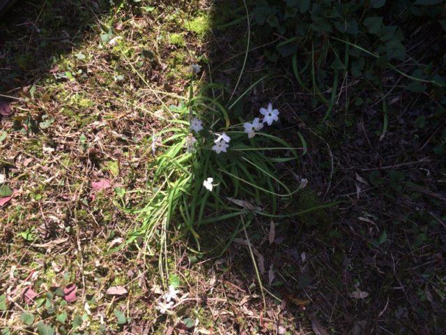写真 2015-04-23 13 16 16