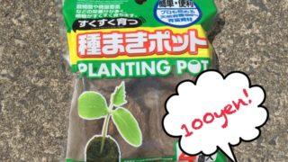 100円ショップの「種まきポット」を実際に使ってみました!その使い心地やいかに?