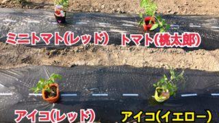 写真で振り返る2017年5月の家庭菜園